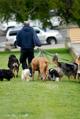 Post image for Biz Idea #80 – Nationally Branded Dog Walking